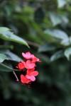 なんか見つけたキレイな花。だんだん疲れてきたのでいい加減に撮っています。