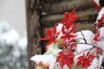 赤城温泉で。いやー、花も凍るわな。