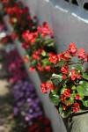 腹ごなしにフクギ並木を散歩。花がたくさん咲いていてもう春の陽気だね。