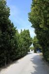 青々とした木々の間に見える青空。ほんとうに天国ちっくだ。