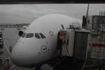 A380がきた。ルフトハンザ。本物を身近で見るのは初めて。そんなにでかい気がしない。