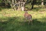 鹿はいたるところにいます