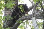 熊もたまにいる。おそったりしないのか。